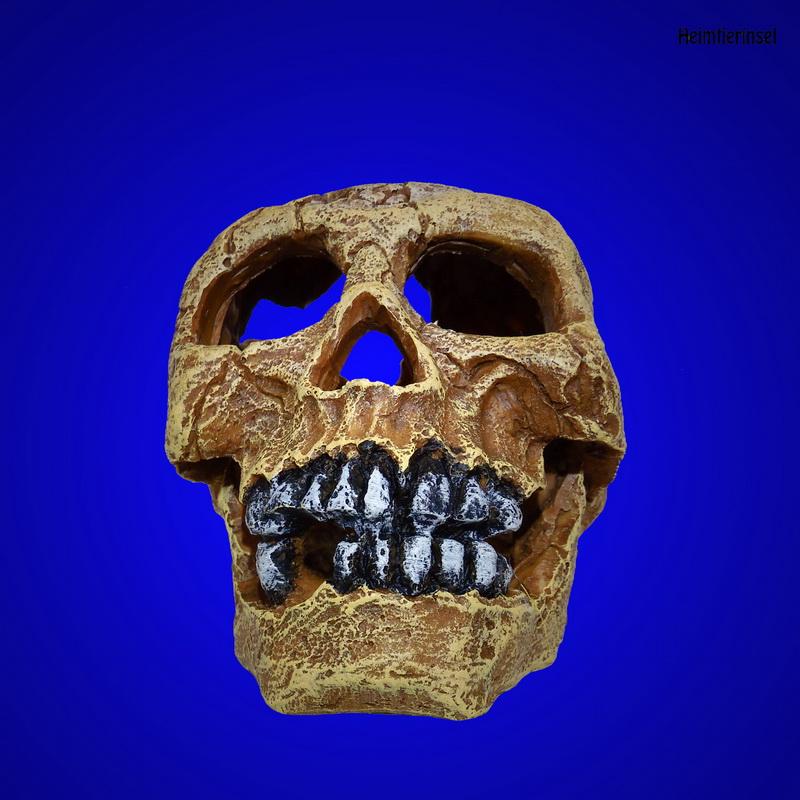 aquarium deko totenkopf sch del 16cm zubeh r terrarium skull h hle ebay. Black Bedroom Furniture Sets. Home Design Ideas