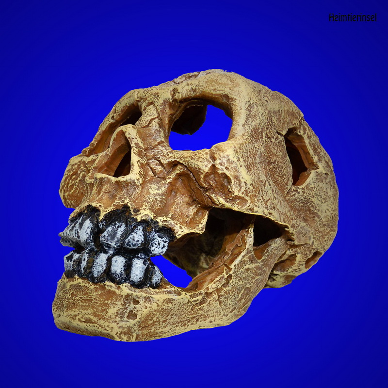 aquarium deko totenkopf sch del 16cm zubeh r terrarium skull h hle. Black Bedroom Furniture Sets. Home Design Ideas