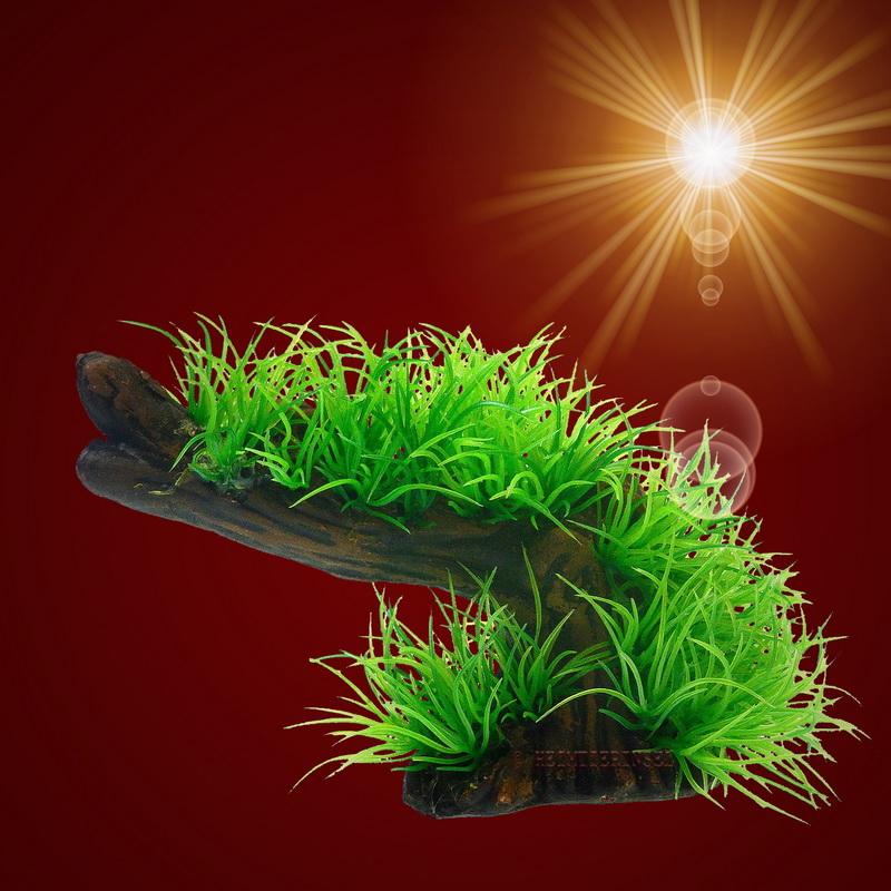 aquarium deko kleine wurzel pflanzen terrarium. Black Bedroom Furniture Sets. Home Design Ideas